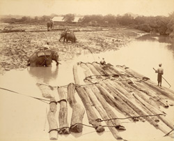 Elephants at work in the timber depot [Burma]